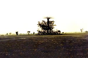 TREES 300x200